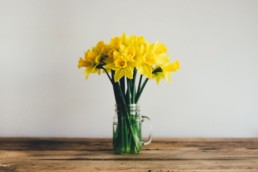 daffodils: harbingers of hope